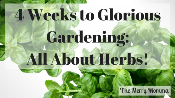 All About Herbs!