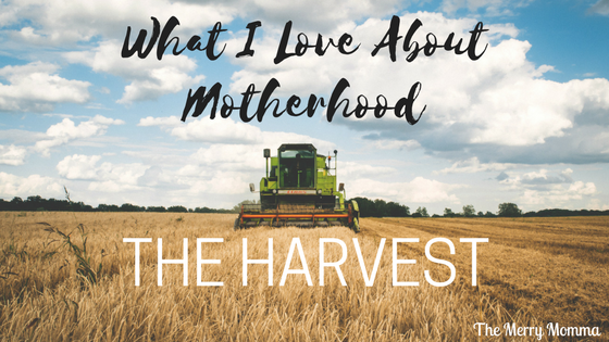 What I Love About Motherhood: The Harvest